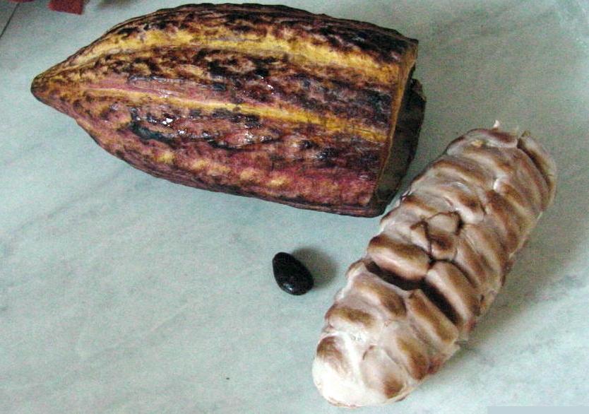 Kakaoschote mit Samen und Fruchtfleisch