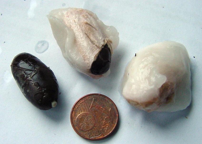 Kakaobohnen mit und ohne Fruchtfleisch